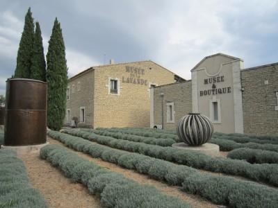 Visite du musée de la lavande